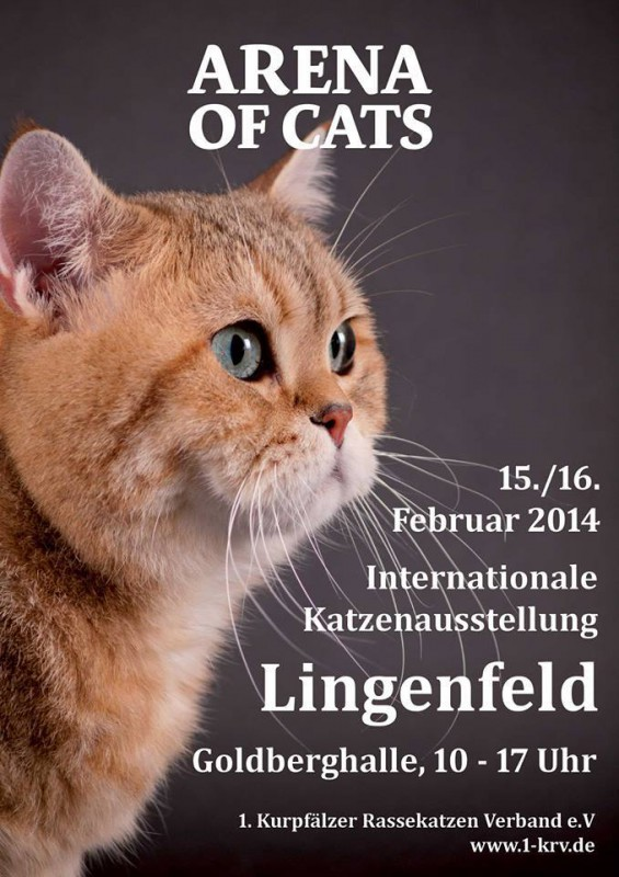 Arena of Cats in Lingenfeld